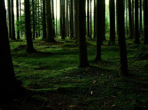 一些森林场景的美术设计图片