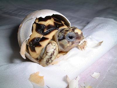 超级可爱的小海龟出生记