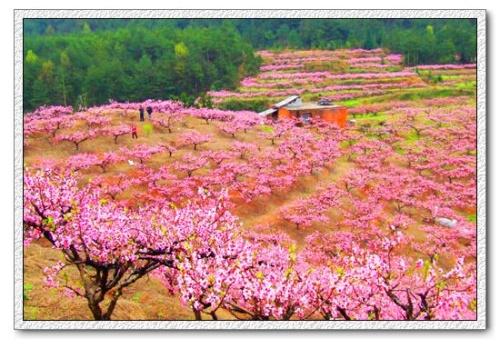 注释:湖南省桃源县西南三十里有桃花源.