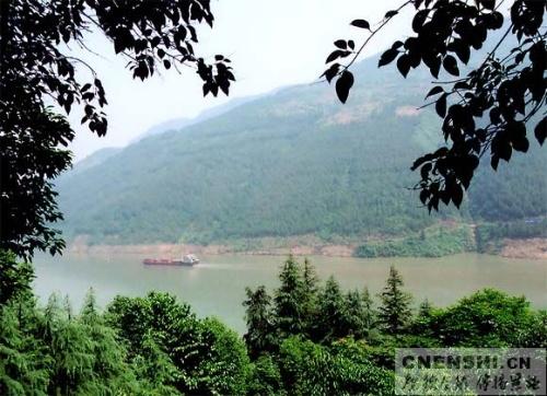 我可爱的家乡——巴东三峡巫峡长系列之七(巴山森林)