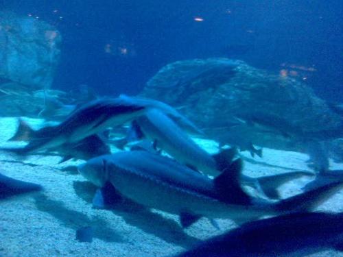 海洋馆 动物园(照片)