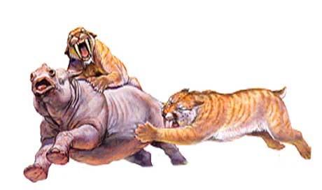 巴博剑齿虎是猎猫科动物发展的顶点,而且无疑是当时地球