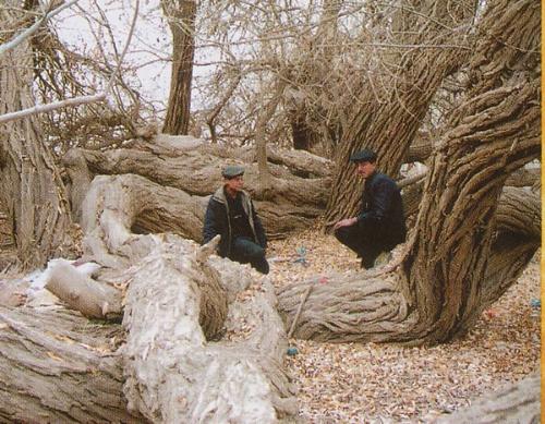 达瓦昆沙漠旅游风景区-中国生态文化旅游图片库-我的