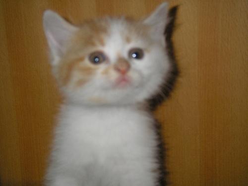可爱的小猫猫!
