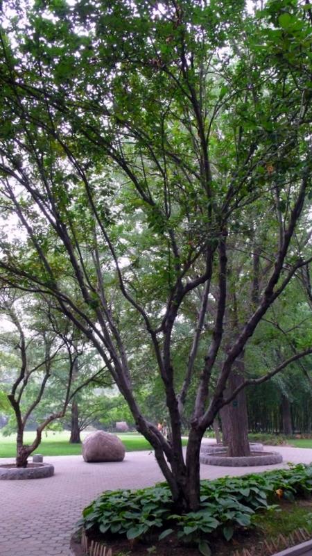 联想起南海观世音菩萨的紫竹林,也算是人间的仙境吧图片