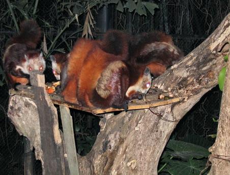 世界最大的夜间野生动物园--广州长隆