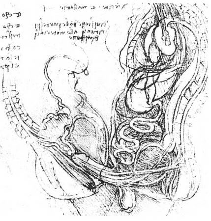 牛的生理结构解剖图