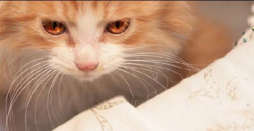 什么时候我去弄只肥肥的加菲猫来.