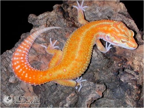 鱼蛙蛇等冷血动物的体温
