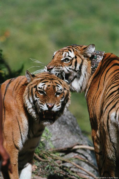 两只老虎,随感